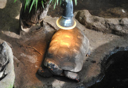 A turtle getting warm at the Copenhagen Zoo.
