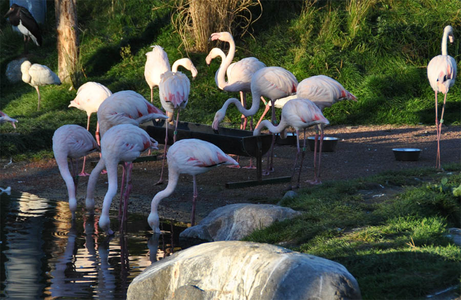 odense zoo kort swinger guide
