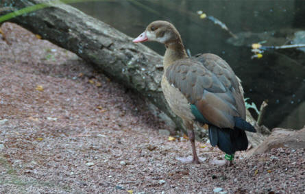 One of the many types of birds at Odense Zoo.