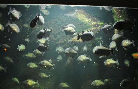 A small section of the aquarium at Odense Zoo.