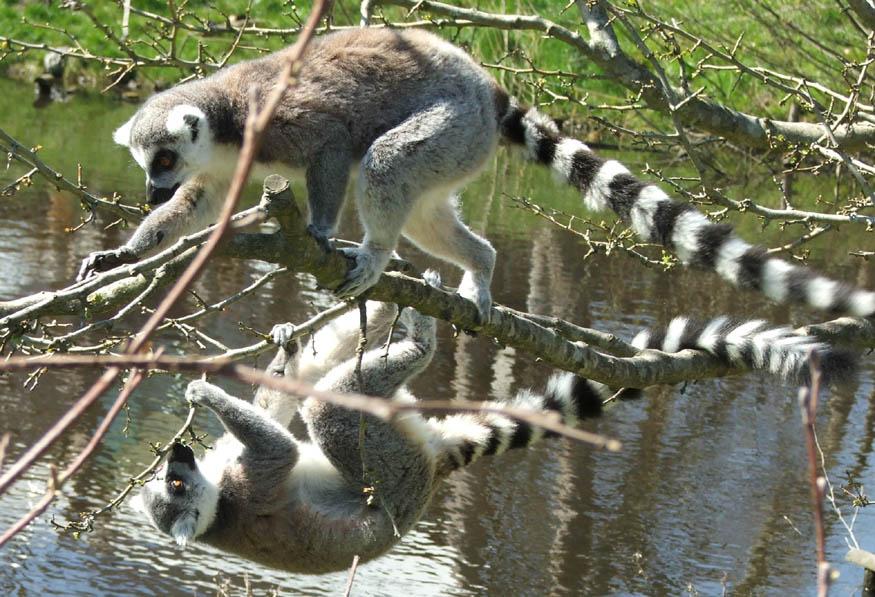 kammeratskab zoo aarhus