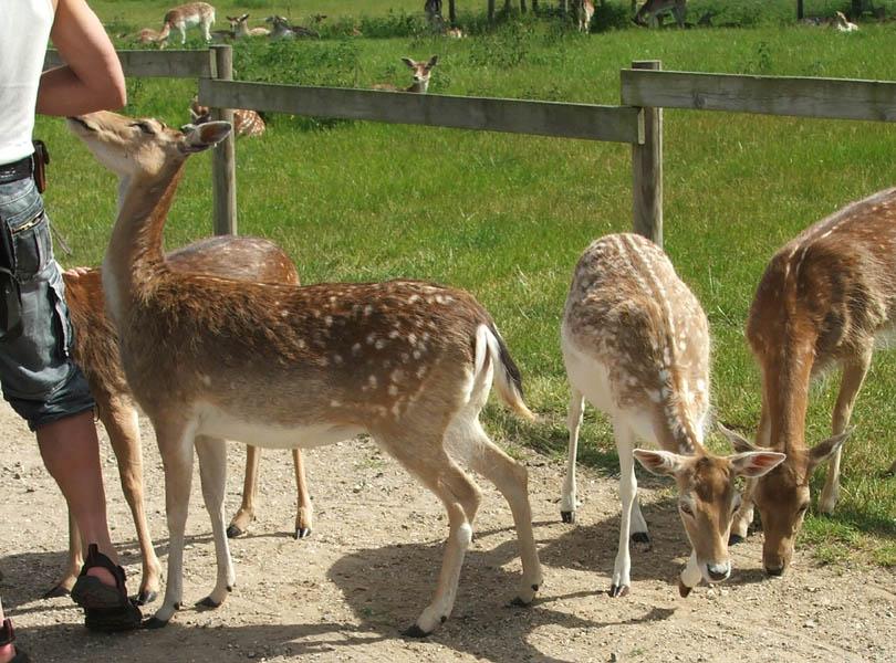 skandinavisk dyrepark på djursland