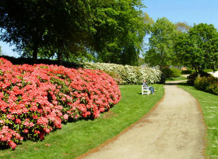 Some of the many colourful rhododendron bushes in the Rhododendron Park in Brønderslev.