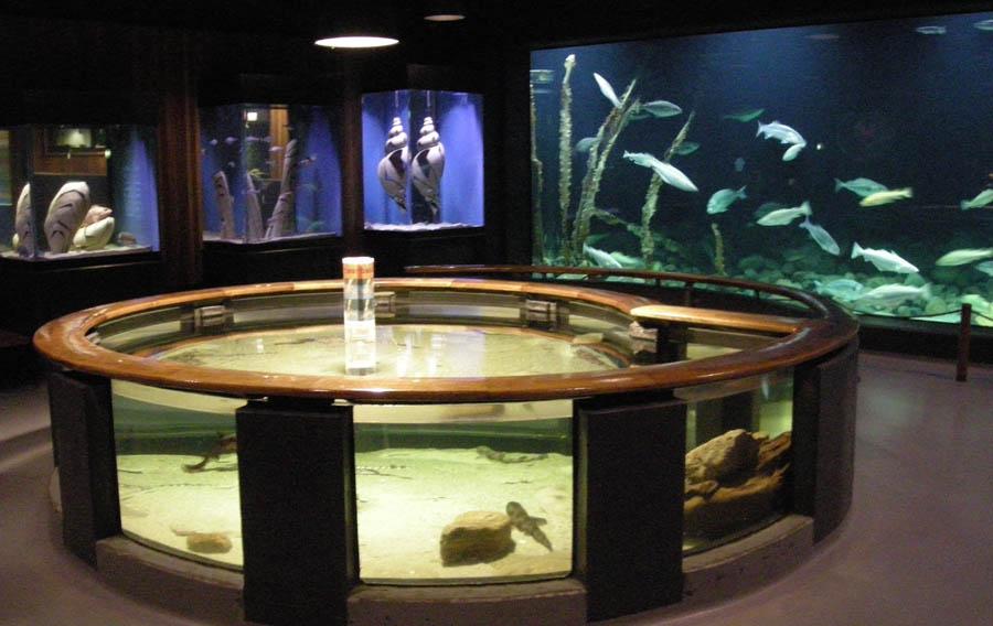 Esbjerg Maritime Museum Aquarium Euro T Guide What