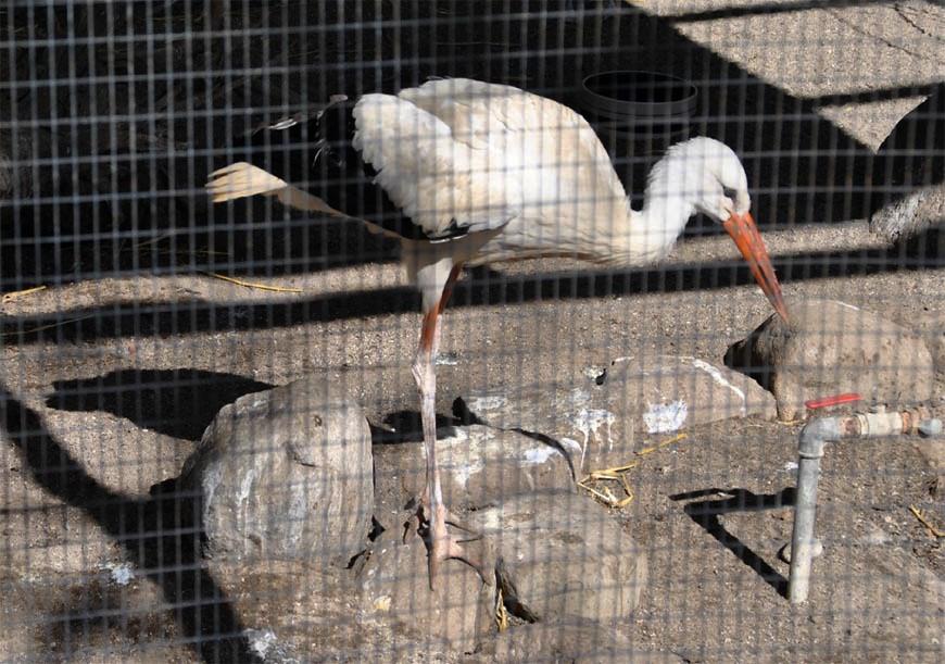 kriminel borger zoo nykøbing f