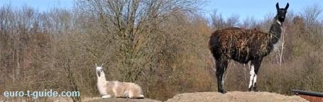 mine ex kæreste billeder Lintrup zoo