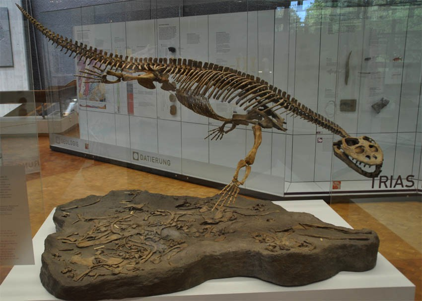 löwentor museum stuttgart